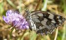 papillon_creuset_didee