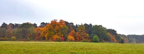 L'automne est une célébration de la vie.